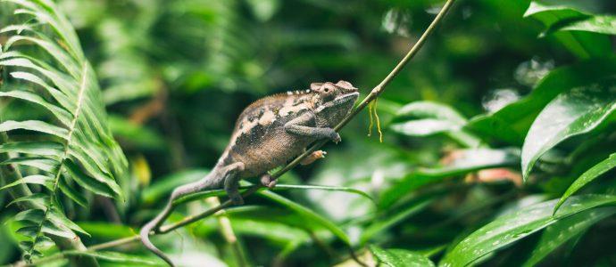 Zero-based adaptability chameleon